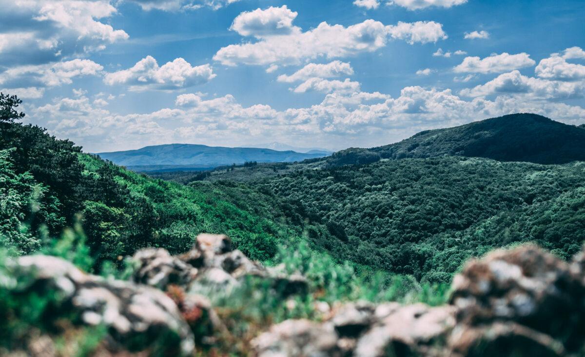 Blick über den Wienerwald Wildgans